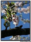 08.04.06 阿里山遊:IMG_4782.jpg