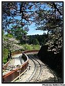08.04.06 阿里山遊:IMG_4871.jpg