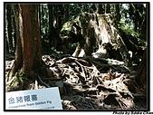 08.04.06 阿里山遊:IMG_4935.jpg
