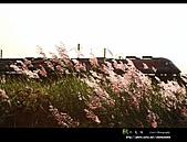 9909『中秋閣家歡』相簿主題投稿活動:[chenwenmin] 秋之氣味.jpg