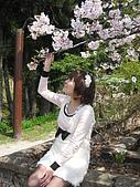 9904『春遊風光』相簿主題投稿活動:[claytor29] 櫻花樹下的女孩