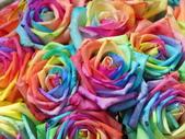 102年6月 「數大便是美」相簿主題投稿活動 :[yamawen_hsu] 玫瑰人生