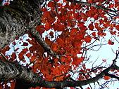 """9910『秋日""""楓""""菊趣』相簿主題投稿活動:[yin1523] 楓情萬種--稍來山"""