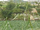 102年6月 「數大便是美」相簿主題投稿活動 :[stephen_cyk] 白鷺鷥 P1020137.JPG