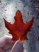 103年12月 「2014年最佳相片」相簿主題投稿活動:(加拿大)多倫多山中景色 <a target='_blank' href='/bcghost/5930402'>[更多bcghost的照片]</a>