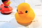 102年11月 「全民呱呱呱」相簿主題投稿活動:[fw190d9] 黃色小鴨