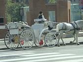 102年12月 「Yahoo網友大方秀」相簿主題投稿活動:[tracysung2002] 費城觀光白馬車