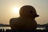 102年11月 「全民呱呱呱」相簿主題投稿活動:[a9108072002annie] 黃色小鴨+夕陽