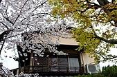 9904『春遊風光』相簿主題投稿活動:[tony251651] 京都賞櫻第十四天
