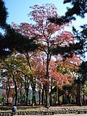 """9910『秋日""""楓""""菊趣』相簿主題投稿活動:[jojo112] 奈良公園"""