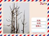 100年12月 「我的明信片」相簿主題投稿活動:秋愁.jpg