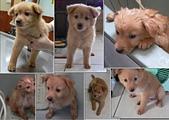 102年12月 「Yahoo網友大方秀」相簿主題投稿活動:[tracysung2002] 97.5.10~14領養流浪幼犬