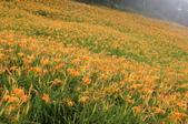 102年6月 「數大便是美」相簿主題投稿活動 :[yamawen_hsu] 金針花
