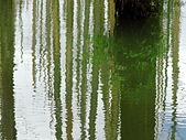 101年7月 「Fun暑假」相簿主題投稿活動:[tk0404] 探訪杉林溪的水漾森林