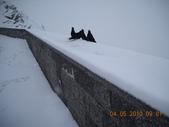 103年03月 「雪跡」相簿主題投稿活動:DSCN1440_633a.JPG <a target='_blank' href='/a4987175168/4214984'>[更多a4987175168的照片]</a>