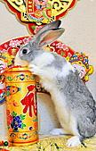 100年3月『喜兔迎春』相簿主題投稿活動:[ping.shen119] DSC_0195_2945.JPG