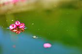 100年1月『櫻花季』相簿主題投稿活動:[tokyo651128] DSC_3633.jpg