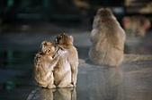 9911『底片特輯』相簿主題投稿活動:[tseng.chien] 日本‧九洲