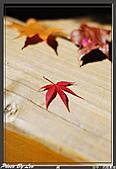 """9910『秋日""""楓""""菊趣』相簿主題投稿活動:[leo_amy] 20091116武陵_0102.jpg"""