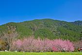103年04月 「花花世界」相簿主題投稿活動:IMG_0588.jpg <a target='_blank' href='/ichiro0910/18779287'>[更多ichiro0910的照片]</a>
