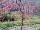 102年9月 「一起去跑步」相簿主題投稿活動:[yanjiun0907] 櫻花樹.JPG