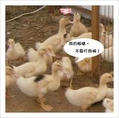 102年11月 「全民呱呱呱」相簿主題投稿活動:[little_elle3773] 鴨鴨~衝出.jpg