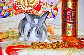 100年3月『喜兔迎春』相簿主題投稿活動:[ping.shen119] DSC_0001_2751.JPG