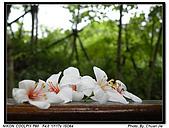『桐花季』相簿主題活動:[b770912] photo_003.jpg