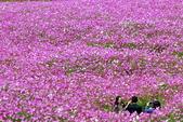 102年6月 「數大便是美」相簿主題投稿活動 :[gs.wu] 福壽山農場