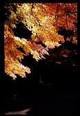 103年12月 「2014年最佳相片」相簿主題投稿活動:『蔡司+正片』所拍出的美麗光影 @福壽山農場松廬 <a target='_blank' href='/lychc/19335535'>[更多lychc的照片]</a>