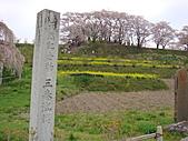 100年1月『櫻花季』相簿主題投稿活動:[stephen_cyk] DSC00012.JPG