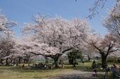 102年6月 「數大便是美」相簿主題投稿活動 :[yamawen_hsu] 滿開