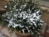 103年03月 「雪跡」相簿主題投稿活動:[tracysung2002] S__6692868.jpg