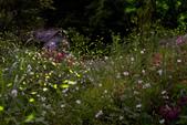 103年06月 「流螢之舞」相簿主題投稿活動:firefly_20110511.jpg <a target='_blank' href='/calum.chueh/5654056'>[更多calum.chueh的照片]</a>