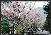 100年1月『櫻花季』相簿主題投稿活動:[leo_amy] 20090308_018.JPG