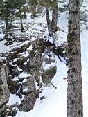 103年03月 「雪跡」相簿主題投稿活動:雪地中的長鬃山羊.JPG <a target='_blank' href='/lucky.yu/18692564'>[更多lucky.yu的照片]</a>