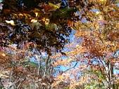 101年11月 「遇見。楓」相簿主題投稿活動:[tk0404] 楓狂在武陵