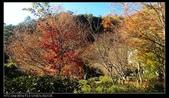 102年12月 「Yahoo網友大方秀」相簿主題投稿活動:[a0932874730] 武陵農場旅遊行程,武陵農場包車,武陵農場一日遊,武陵農場賞楓