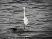 103年12月 「2014年最佳相片」相簿主題投稿活動:大白鷺靜站在水中,等待捕食機會 <a target='_blank' href='/tracysung2002/19277140'>[更多tracysung2002的照片]</a>