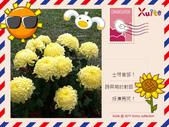 100年12月 「我的明信片」相簿主題投稿活動:黃色波斯菊.jpg