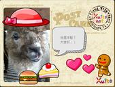 100年12月 「我的明信片」相簿主題投稿活動:紅帽駱駝.jpg