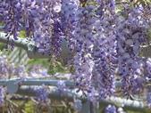 102年6月 「數大便是美」相簿主題投稿活動 :[yamawen_hsu] 紫色
