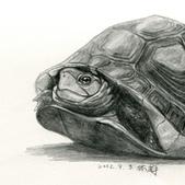 101年9月 「創意封面DIY」相簿主題投稿活動:[blueway436] 食蛇龜速寫