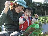 【冰原歷險記3:恐龍現身】親子合照募集活動:[amo09752] 採草莓.JPG