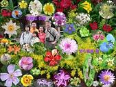 102年12月 「Yahoo網友大方秀」相簿主題投稿活動:[tracysung2002] 2009母親節