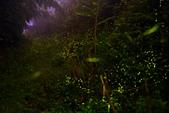 103年06月 「流螢之舞」相簿主題投稿活動:2014.05.24溫家茶園 <a target='_blank' href='/gs.wu/18590739'>[更多gs.wu的照片]</a>
