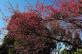 100年1月『櫻花季』相簿主題投稿活動:[tokyo651128] DSC_3679.jpg