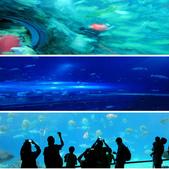 101年9月 「創意封面DIY」相簿主題投稿活動:[ouyang.adams] 印象海生館