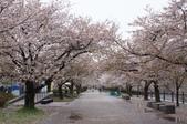 102年6月 「數大便是美」相簿主題投稿活動 :[yamawen_hsu] sakura