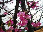 100年1月『櫻花季』相簿主題投稿活動:[stephen_cyk] P1000202-1.jpg